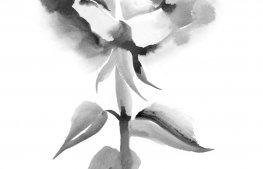 tatuaggi-watercolor-dr-zivago-tattoo